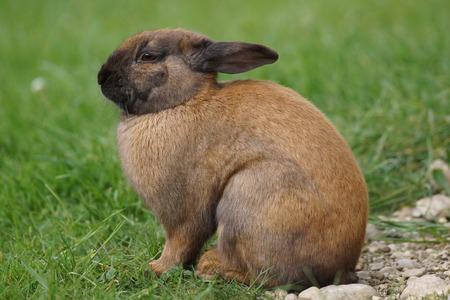 bunnie: Rabbit sitting in a meadow Stock Photo