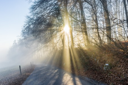 Winterwald mit Sonne Strahl Licht durch den Nebel