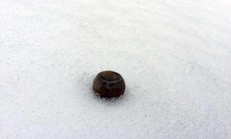 Snow packed Acorn Banco de Imagens