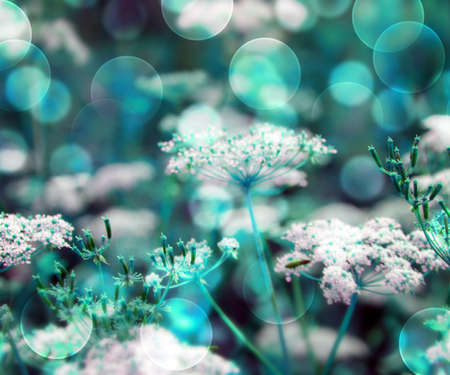 Blue Wild Flowers Background Stock Photo - 17075338