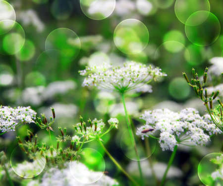 Green Wild Flowers Background Stock Photo - 17075340