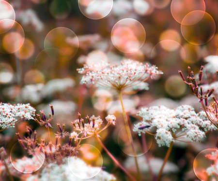 Orange Wild Flowers Background Stock Photo - 17075337