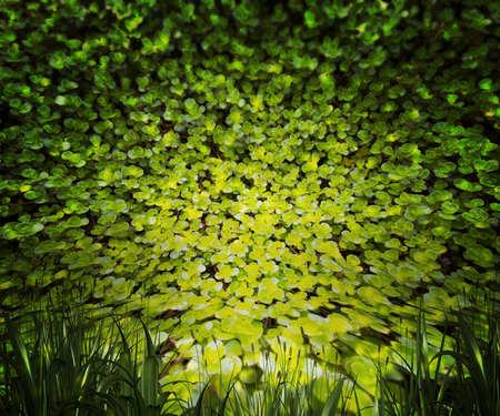 Plants Nature Background Stock Photo - 21138404