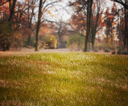 Simple Grass Backdrop Stock Photo - 21138406