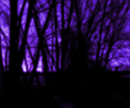 Dark Trees Background photo