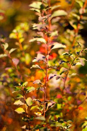 Sprig Autumn Park photo