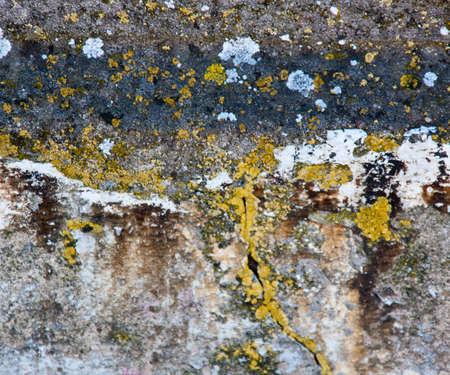 medioeval: Grunge Texture