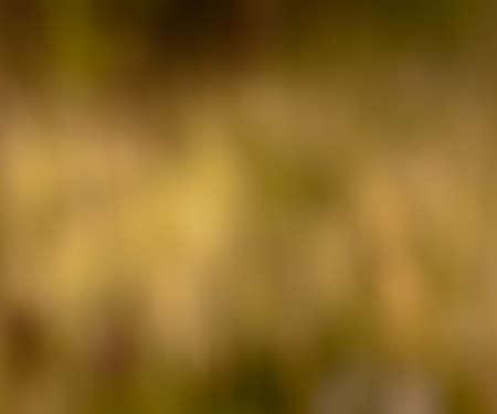Blurred Photo photo