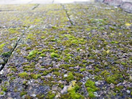 fairy toadstool: Green Moss Floor Stock Photo