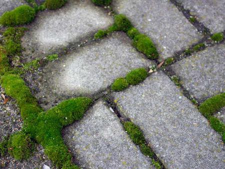 fairy toadstool: Green Moss Closeup Stock Photo