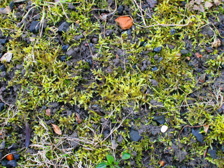 moss: Moss in Forest Texture Stock Photo