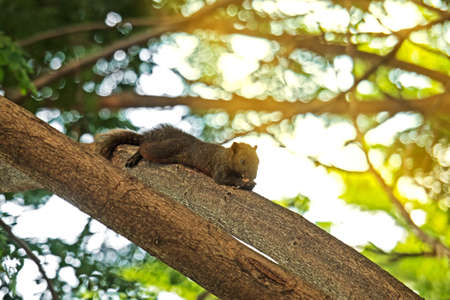 Closeup of Squirrel Eating Food on Tree