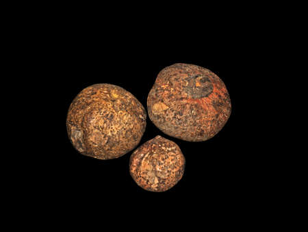 Group of Konjac Corm or Elephant yam Isolated on Black Background, Clipping Path