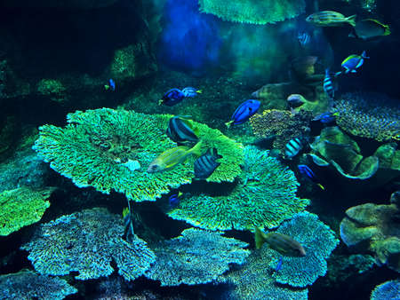 Closeup Beautiful Scene of Undersea Coral Reef with Sea Fish Standard-Bild