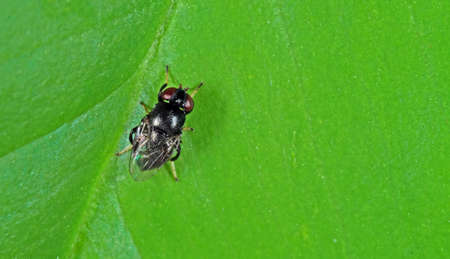 Macro Photography of Little Fly on Green Leaf Background