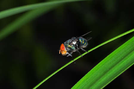 Macro Photography of Blow Fly on Green Leaf Isolated on Background Stock Photo