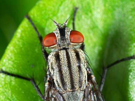 Macro Photography of House Fly on Green Leaf Zdjęcie Seryjne