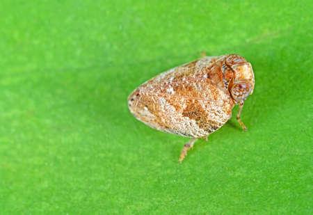Macro Photography of Little Bug on Green Leaf
