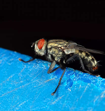 Macro Photography of House Fly Isolated on Background Stock Photo