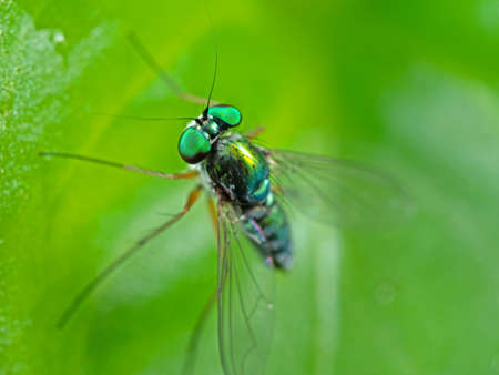 Macro Photography of Head of Beautiful Fly on Green Leaf