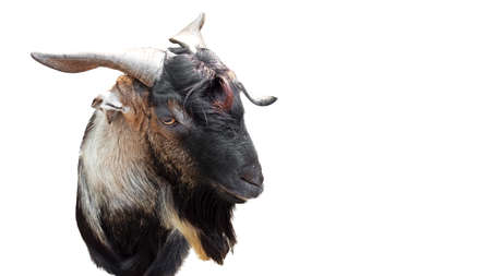 Closeup Funny Goat Face Isolated on White Background with Clipping Path, Picture of Emotion Concept Stock Photo