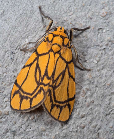Macro Photography of Yellow Moth on Gray Wall Stock Photo