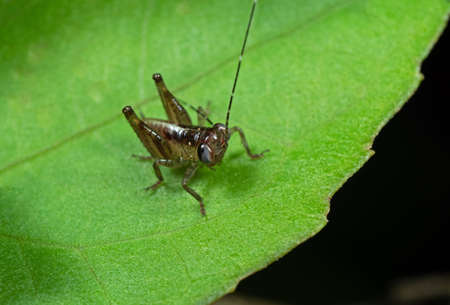 Macro Photography of Tiny Grasshopper on Green Leaf Stock Photo