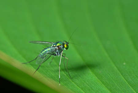 Macro Photography of Beautiful Fly on Green Leaf Isolated on Background