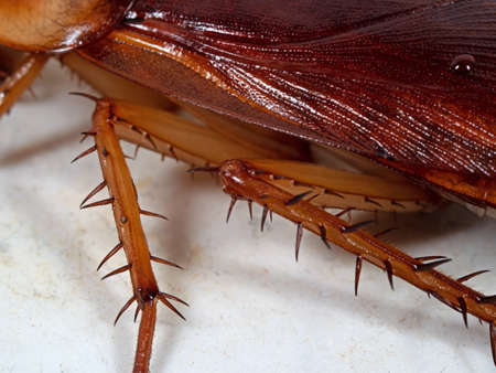 Macro Photography of Detail of Cockroach on The Floor, Selective Focus