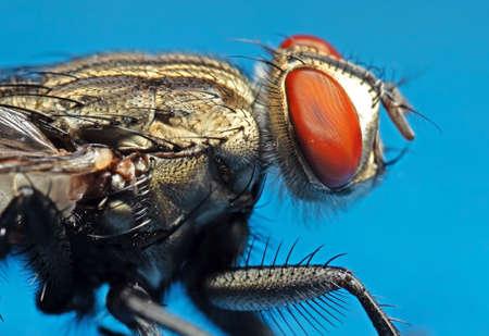 Macro Photography of Housefly Isolated on Background Zdjęcie Seryjne