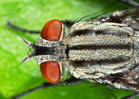 Macro Photography of Housefly on Green Leaf