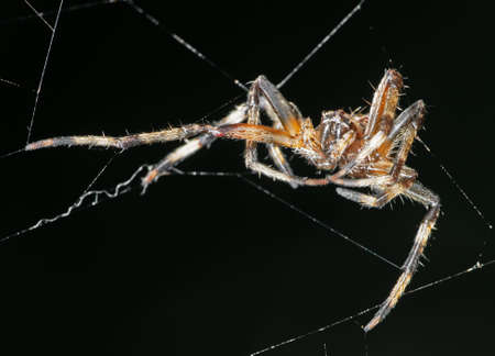 Macro Photography of Spiders are on the Web Isolated on Black Background