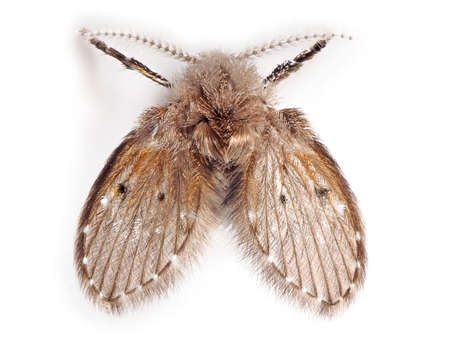 Macro Photography of Moth Fly Isolated on White Background