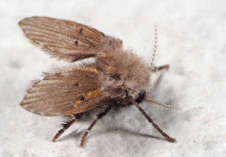 Macro Photography of Drain Fly on White Floor