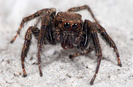 Macro Photography of Jumping Spider on White Floor