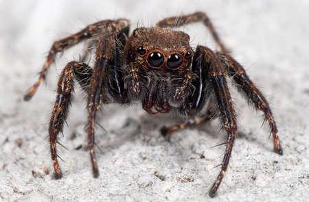Macro Photography of Jumping Spider on White Floor Reklamní fotografie - 125337306