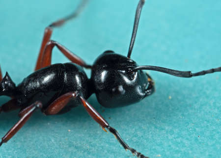 Macro Photography of Head of Black Ant on The Floor Stock fotó