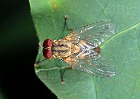 Macro Photography of Housefly on Green Leaf Zdjęcie Seryjne