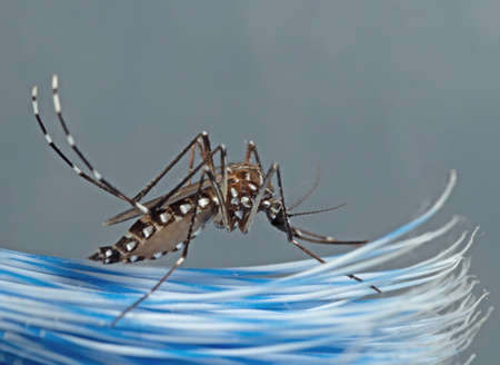 Macro Photography of Yellow Fever Mosquito on Toothbrush Stock fotó