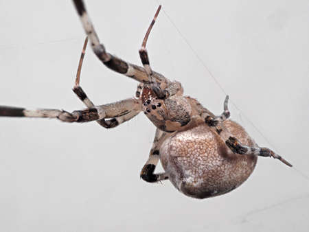 Macro Photography of Spider on The Web Isolated on Gray Background