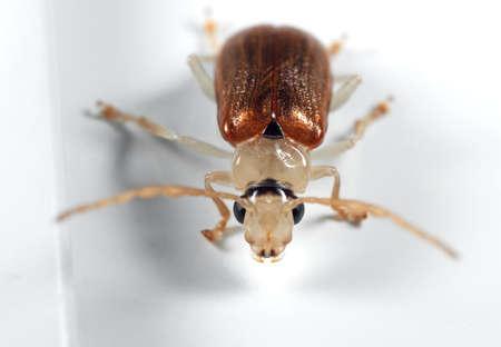 Macro Photography of Beetle on White Floor