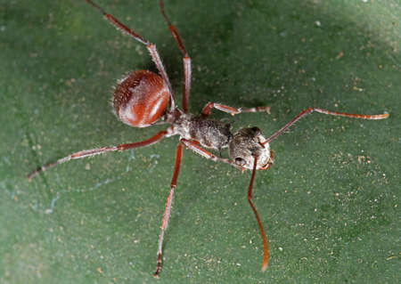Macro Photography of Ant on Green Leaf