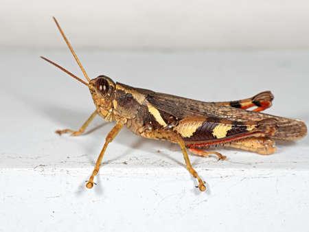 Macro Photography of Grasshopper on White Floor Stock Photo