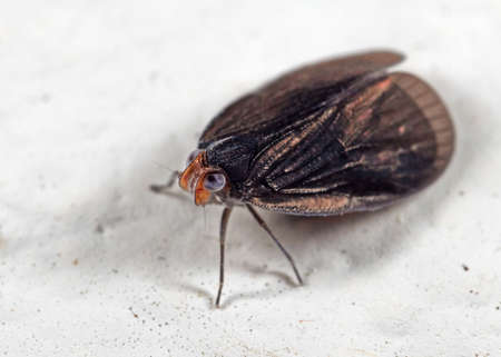 Macro Photography of Tiny Insect on White Floor