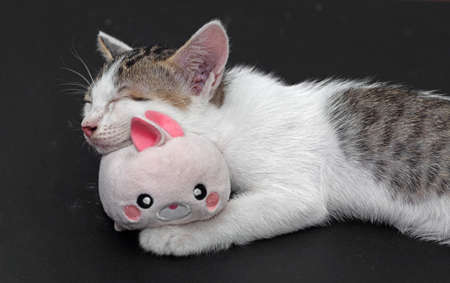 Closeup Little Cute Kitten Sleeping with Rabbit Doll Stock Photo