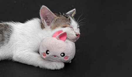 Closeup Little Cute Kitten Sleeping with Rabbit Doll with Copy Space
