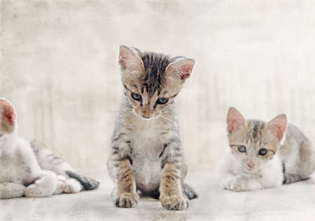 Watercolor Picture of Cute Tabby Kitten on The Floor