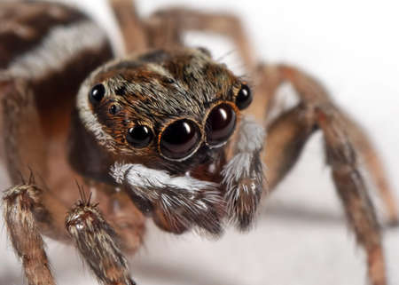 Macro Photography of Jumping Spider Isolated on White Floor Stock fotó