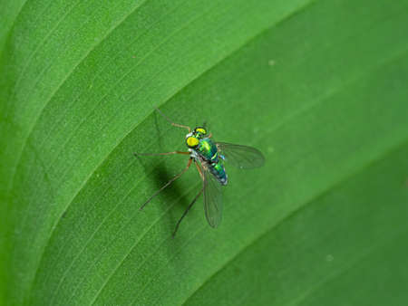 Macro Photography of Robber Fly on Green Leaf