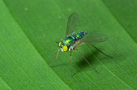 Macro Photography of Robber Fly on Green Leaf Reklamní fotografie